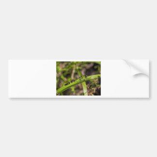 Green Eastern Pondhawk Dragonfly Bumper Sticker
