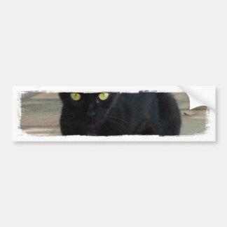 Green Eyed Black Cat; No Greeting Bumper Sticker