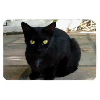 Green Eyed Black Cat; No Greeting Flexible Magnets