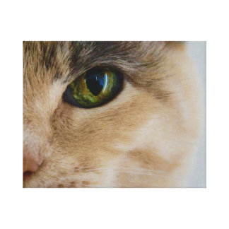Green Eyed Calico Canvas Print