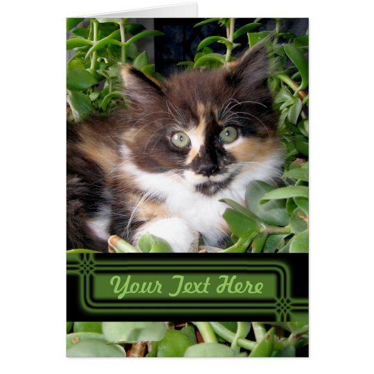Green Eyed Cat Note Card