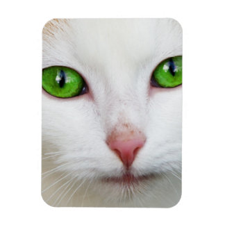 Green Eyed White Cat Flexible Magnets