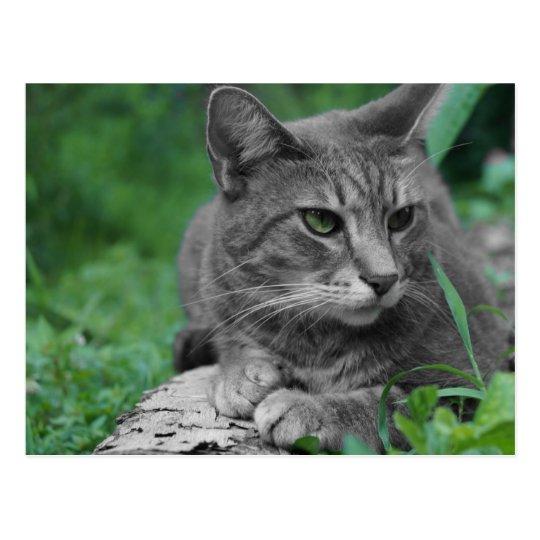 Green Eyes Cat Postcard