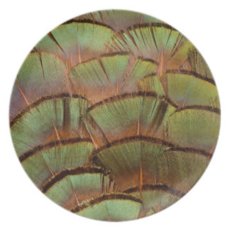 Green fanned Pheasant feather Plate