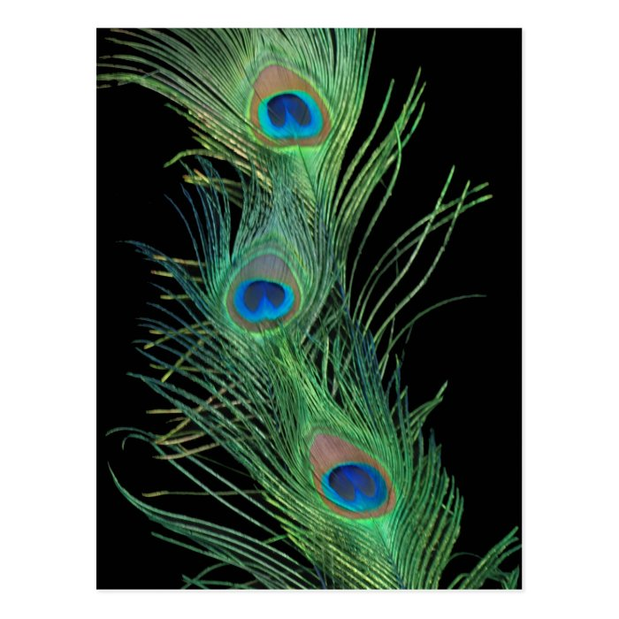 Green Feathers with Black Postcard