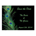 Green Feathers with Black Save the Date Post Card