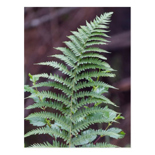 green fern in the forest postcard