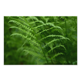 Green fern photo print