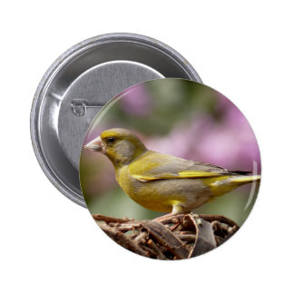 Green Finch 6 Cm Round Badge