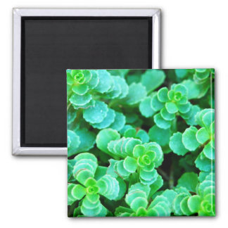 Green Floral Abstract Square Magnet