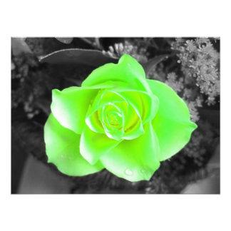 Green Flower Head with Dark Background (1) Photo