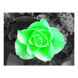 Green Flower Head with Dark Background (2) Photographic Print