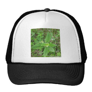 Green Flower nice garden and park Cap