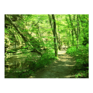 Green Forest Postcard