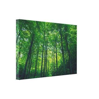 Green forest with tall trees canvas print