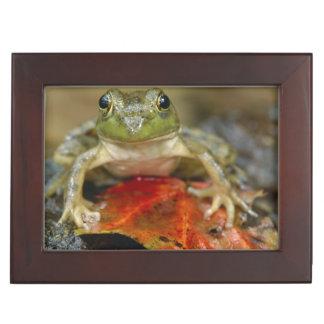 Green frog along the Buffalo Creek bank, Wet Keepsake Box