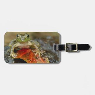 Green frog along the Buffalo Creek bank, Wet Luggage Tag