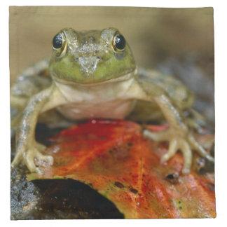 Green frog along the Buffalo Creek bank, Wet Napkin