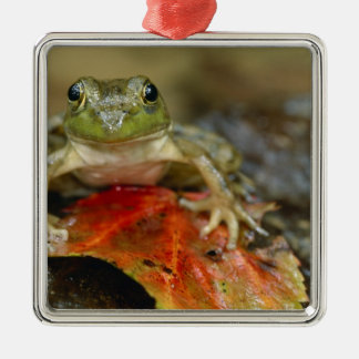 Green frog along the Buffalo Creek bank, Wet Silver-Colored Square Decoration