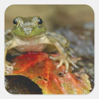 Green frog along the Buffalo Creek bank, Wet Stickers