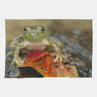 Green frog along the Buffalo Creek bank, Wet Tea Towel