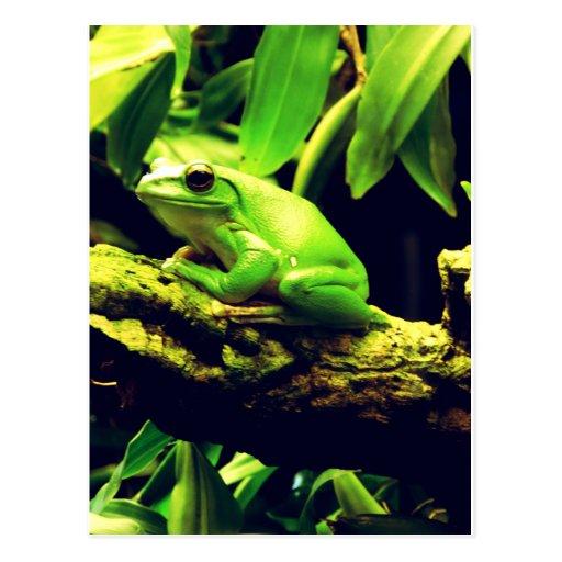 Green Frog Animal Postcard