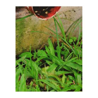 GREEN FROG HIDING IN GRASS QUEENSLAND AUSTRALIA WOOD PRINT