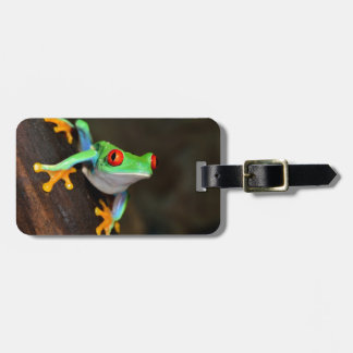 Green Frog Nature Wildlife Luggage Tag