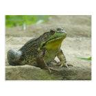 Green Frog. Postcard