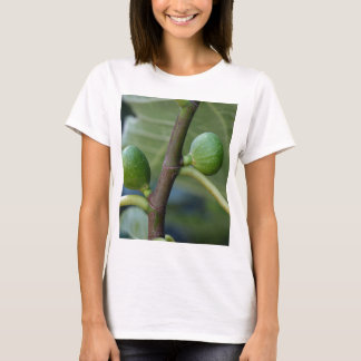 Green fruits of a common fig  tree T-Shirt