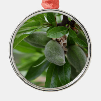 Green fruits of an almond tree Silver-Colored round decoration