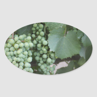 Green Grapes Growing Stickers