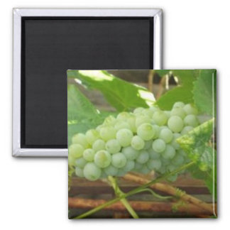 Green Grapes of California Magnet