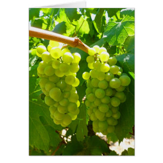 Green Grapes on the Vine Card