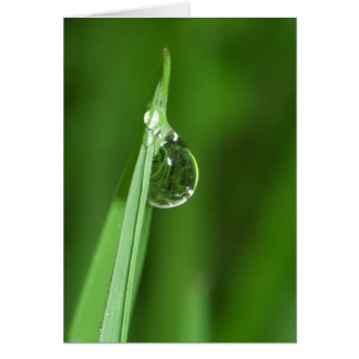 Green grass and water droplet with reflection greeting card