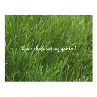 Green Grass Post Card