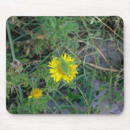 Green grasshopper on a yellow flower. mouse mat