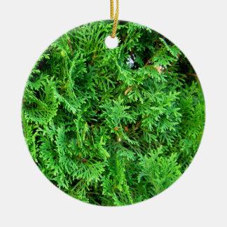 Green growing evergreen shrub colorful art photo round ceramic decoration