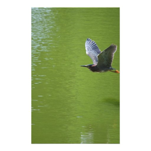 Green Heron In Mid Air Flyers