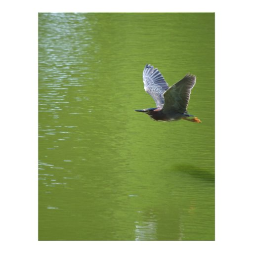 Green Heron In Mid Air Flyer Design