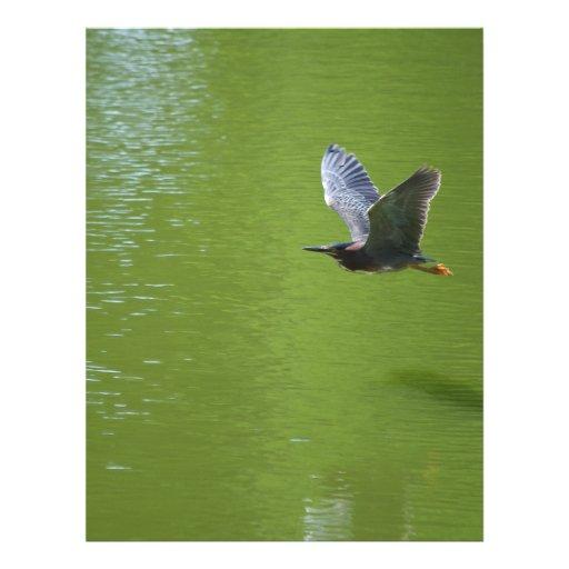 Green Heron In Mid Air Flyer