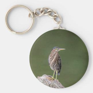 Green Heron on a log Key Ring