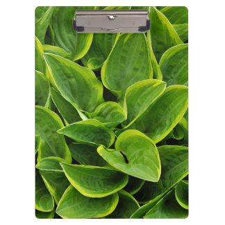 Green hosta leaves print clipboard