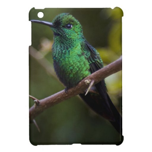 Green hummingbird Costa Rica Cover For The iPad Mini
