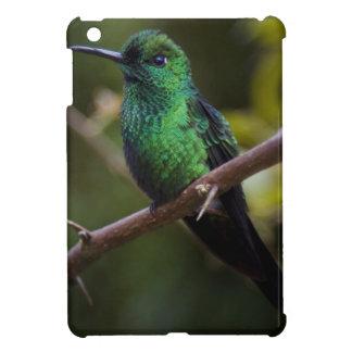 Green hummingbird Costa Rica iPad Mini Cover