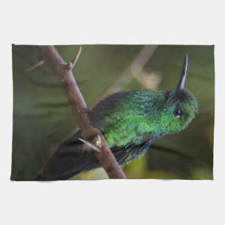 Green hummingbird Costa Rica Kitchen Towels