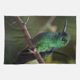 Green hummingbird Costa Rica Kitchen Towels