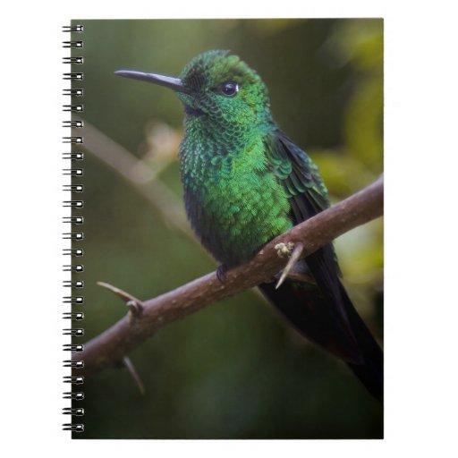 Green hummingbird Costa Rica Journal