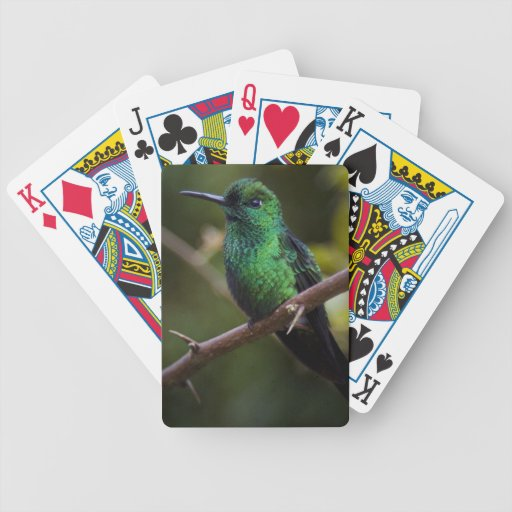 Green hummingbird Costa Rica Card Decks