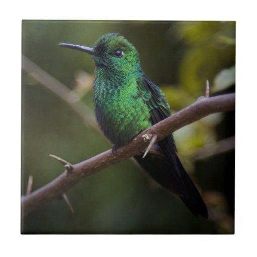 Green hummingbird Costa Rica Ceramic Tiles